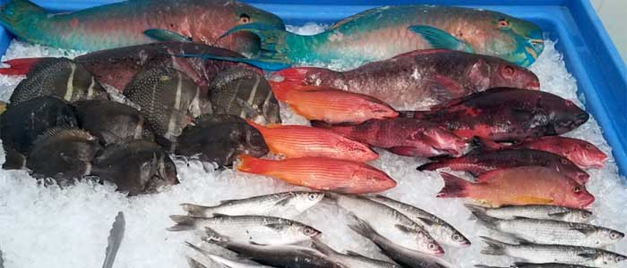 big-island-hilo-fish-market
